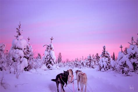 adventure  finnish lapland saariselkae  timetravels   reviews tourradar