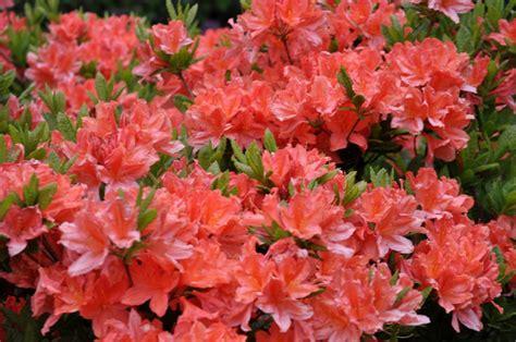 Foto: Botāniskais dārzs pārsteidz ar ziedošo augu krāšņumu un daudzveidību - KasVērtīgs.lv ...