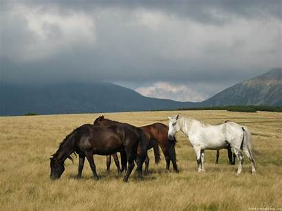 Horses Wild Horse Running Mountains Brown Mountain
