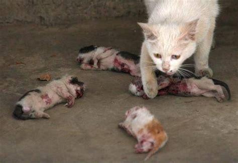 Kitten Photos Cute Overload Bar One