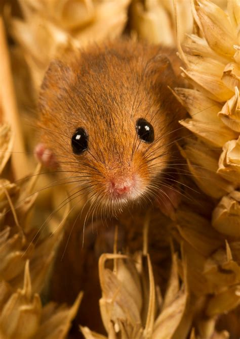 mice shrews voles wildlife photography paul gadd