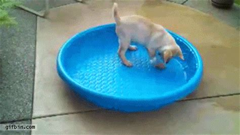 Puppy Pool GIF - Find & Share on GIPHY