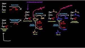 Triglyceride    Triacylglycerol Synthesis