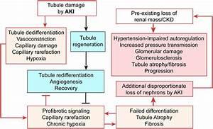 Failed Tubule Recovery  Aki