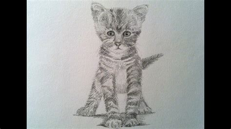 draw  realistic cat drawing  kitty cat youtube