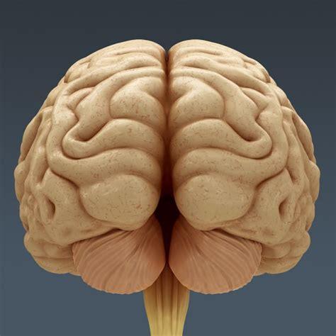 Lamp Touch Control by Human Brain Anatomy 3d Model Max Obj 3ds Fbx C4d