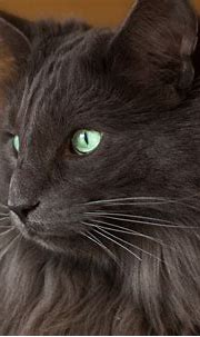 Newest For Cat Images Hd Full Screen - Lee Dii