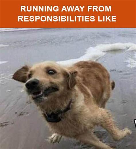 Running Away Meme - 1000 images about memes on pinterest