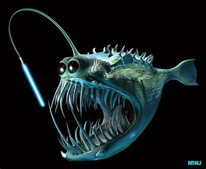Fish B3ta Its Films Ninj Wed Dec