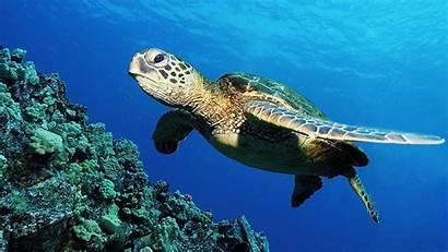 Sea Turtles Wallpapers Turtle Beach