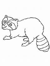Raccoon Coloring Pages Printable Dog Baby Getcoloringpages Popular Bestcoloringpagesforkids Bag sketch template