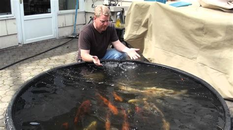 Clean Backyard Pond - koi pond water garden clean out new jersey