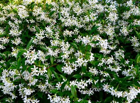 plants for shady areas top 9 types of plants for shady areas