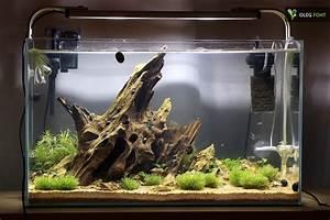 Aquarium Einrichten 60l : biconeo aquascaping neues 60l becken aquarium ~ Michelbontemps.com Haus und Dekorationen