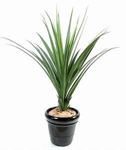 Plante Verte Exterieur