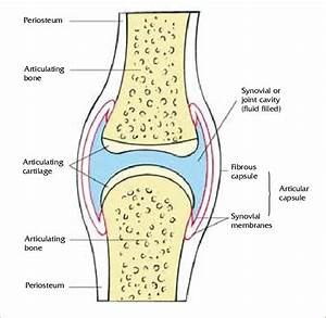 A General Synovial Joint