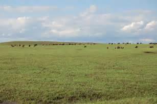 Great Plains Vegetation