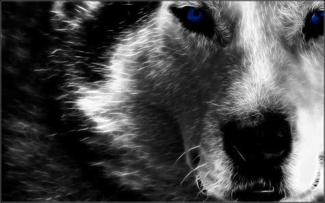 Alpha Wolf Wolf Wallpaper by Fractal Wolf Hd Wallpaper Background Image 1920x1200