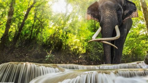 Waterfalls Wallpaper With Animals - animals elephants waterfall wallpapers hd desktop and
