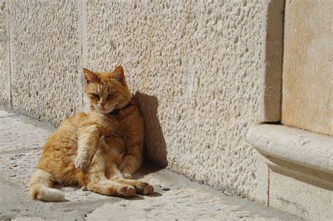cats  vitamin  cats
