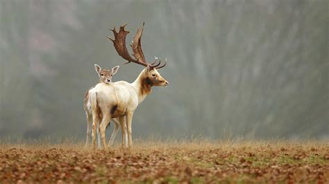 Baby Animals Wallpapers Free - deer desktop backgrounds 59 images