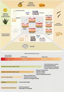 Classification Of Traditional Therapies For Skin Wound