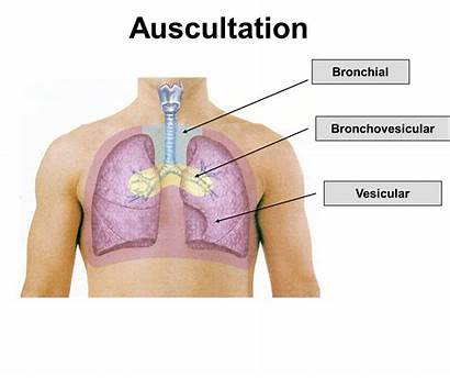 Sounds Respiratory Breath Bronchial Bronchovesicular Lung Vesicular