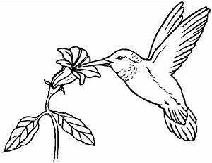Hummingbird Coloring Pages | Coloring Index | applique ...