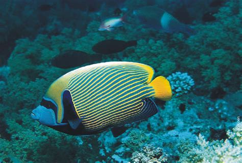 science blog fish   water animals