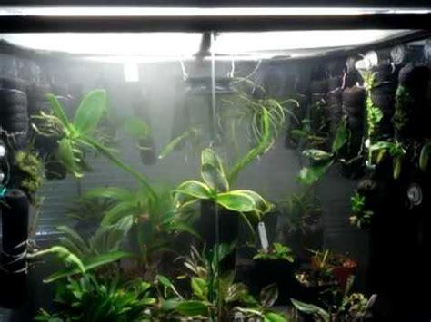 orchid vivarium  months youtube
