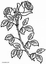 Coloring Rose Pages Roses Cross Plant Crosses Printable Bush Drawing Cool2bkids Colouring Adult Flower Print Skulls Hearts Getcolorings Getdrawings sketch template