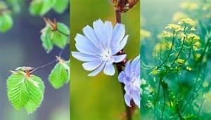 Blumen Erkennen App : pflanzen bestimmen und blumen bestimmen mit diesen apps ~ A.2002-acura-tl-radio.info Haus und Dekorationen
