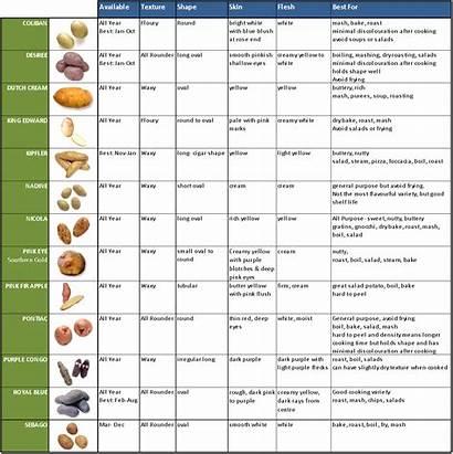 Types Potatoes Potato Varieties Different Uses Sweet