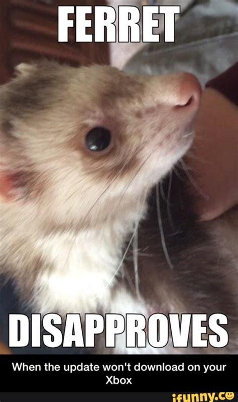 Ferret Meme - ferret ifunny