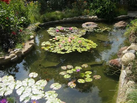 Pond Supplies, Fish Food, Filters, Pumps, Uv Sterilizers