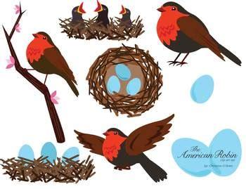 american robin bird clip art set  christine obrien