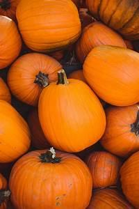 900, , pumpkin, images, , download, hd, pictures, , u0026, photos, on, unsplash