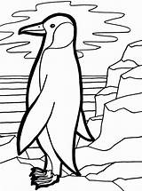 Penguin Coloring Emperor Pages Cute Penguins Colouring Drawings Popular Calendar Template sketch template