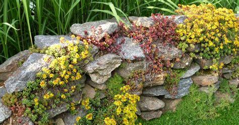 pflanzen für steinmauer natursteinmauern bepflanzen mein sch 246 ner garten