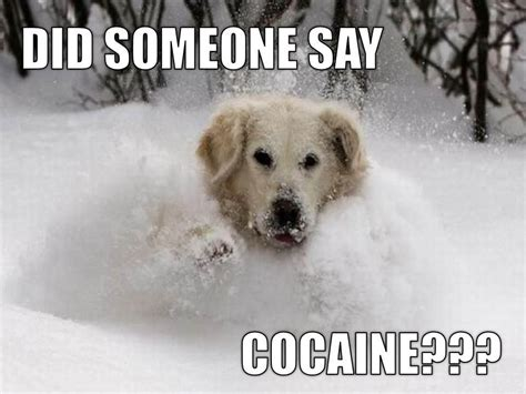 Bear Cocaine Meme - cocaine bear meme memes