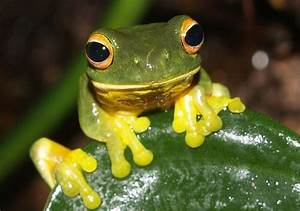 Image  Rainforest Harley Frogs Frogs Are Well