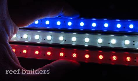 on with koven aquatics white and blue led