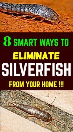 How To Get Rid Of Fishmoths In Cupboards by Silverfish Or Fish Moths Are Mostly Found In Laundry Rooms