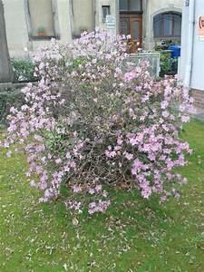 Weiß Blühender Strauch : sch ner bl hender strauch was ist das mein sch ner ~ Lizthompson.info Haus und Dekorationen