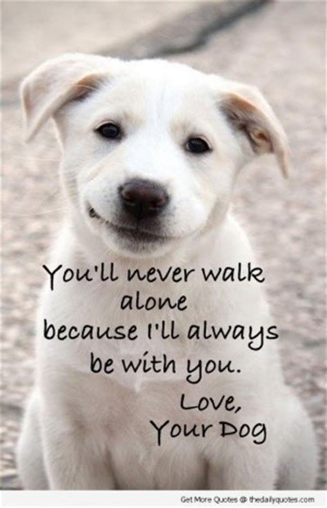 cute dog quotes  sayings quotesgram