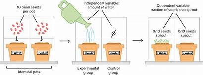 Scientific Definition Method Experiment Controlled Biology Variables