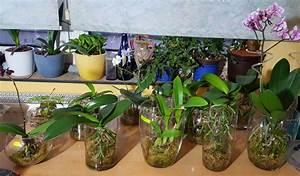 Orchideen Im Glas : federle news orchideen in sphagnum moos ~ A.2002-acura-tl-radio.info Haus und Dekorationen