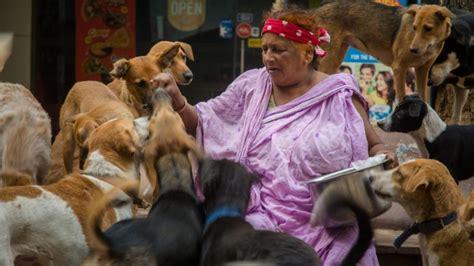delhis dog lady cares   strays aol uk travel