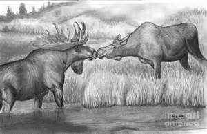 Moose Pencil Drawings
