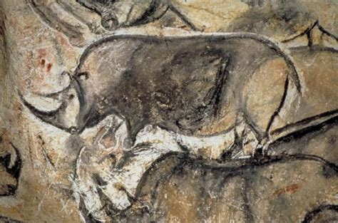 prehistoric drawings  chauvet caves  france added